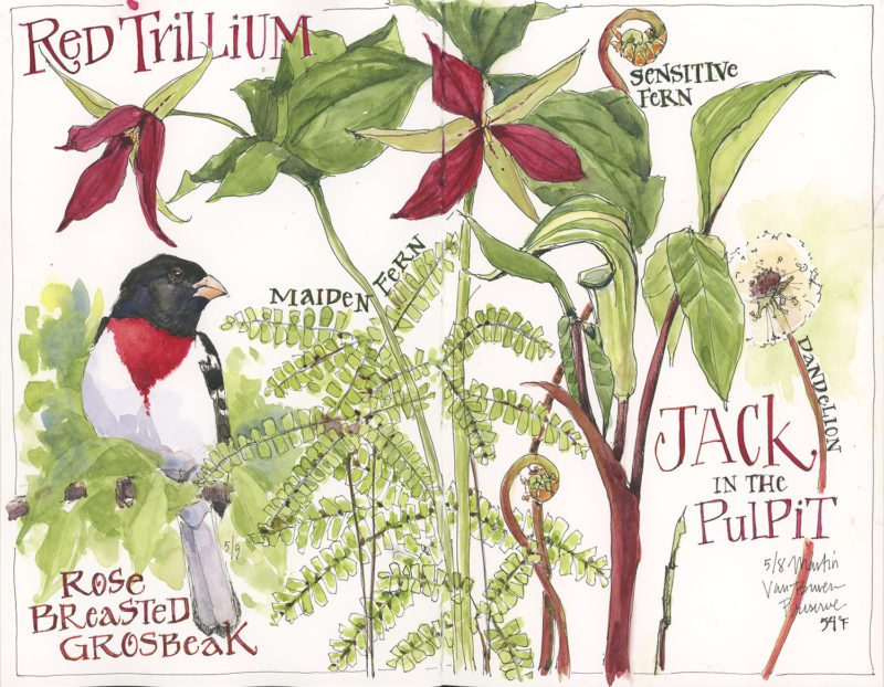 Jean Mackay: (Family Event) Nature Explorer's Hike and Sketch (Afternoon Session)